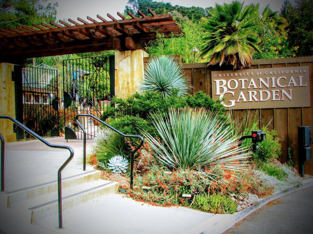 BACPS Spring Meeting - Held at the UC Botanical Garden, Berkeley