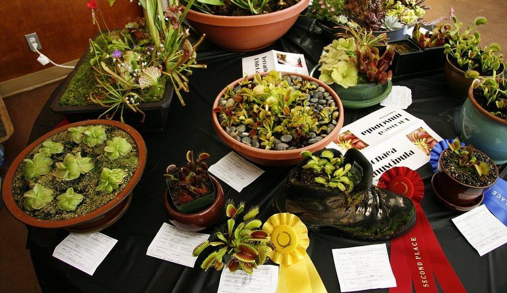 BACPS Annual Show & Sale - Garden Center on Lake Merritt, Oakland CA