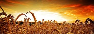 the harvest is the end of the age - Jesus, Mt 13:39 -