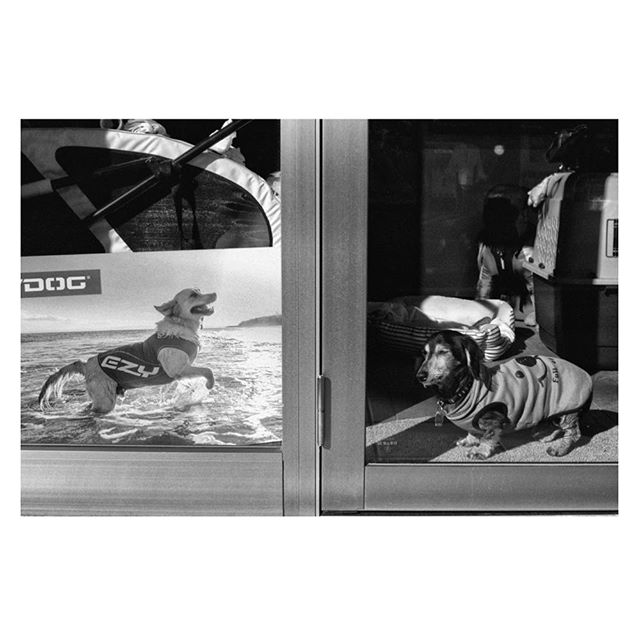Dog's life... . . . . . #tokyospc#myspc#streetphotographerscommunity#life_is_street#life_is_street_community#eyeshotmag#lensculturestreets#SPiCollective#friendsinperson #fromstreetswithlove #voidtokyo #frametokyocollective #filmisnotdead #japan #blackandwhite#nightandday #tokyo#filmphotography #streetphotography #urbanstreetphotogallery #kamakura #dogphotography #dog#kodaktx400 #nikonf4 #photodog