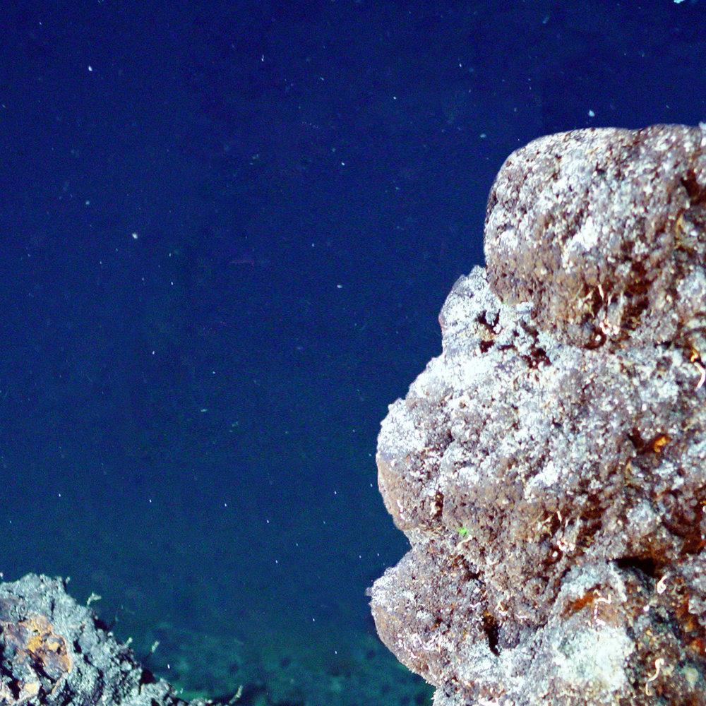dead coral square