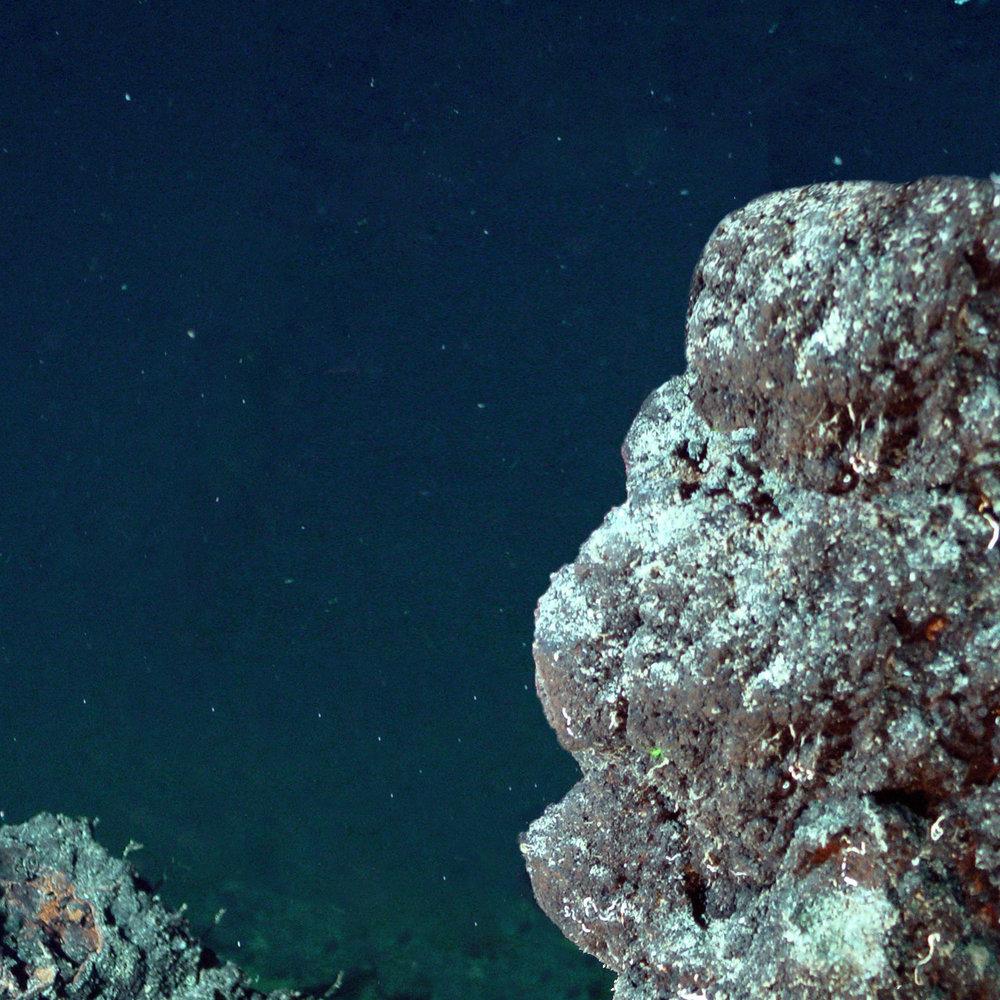 coral dead square.jpg
