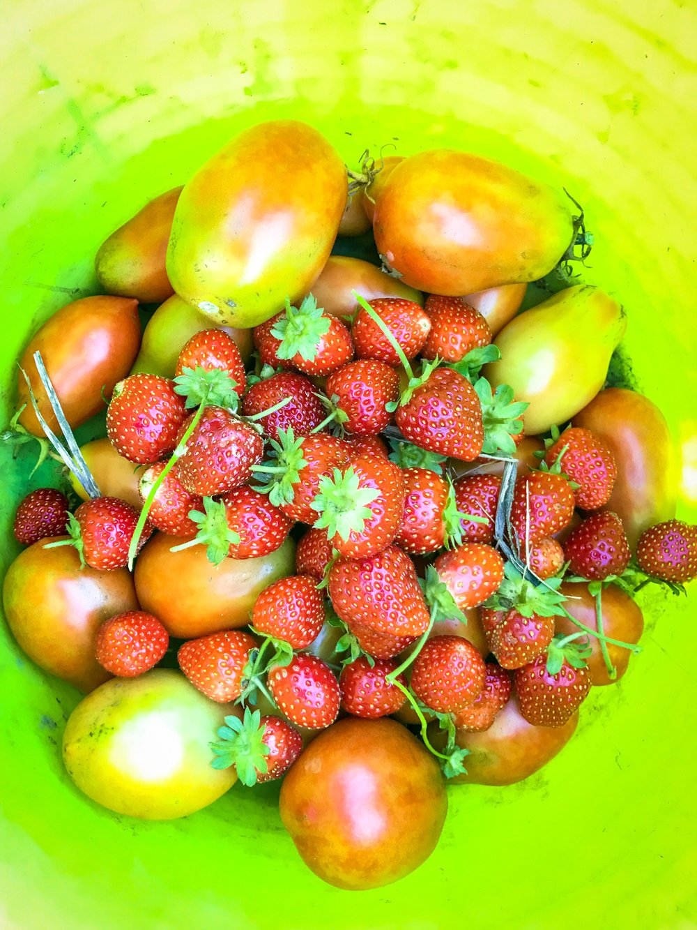 So many tomatoes n strawberries!