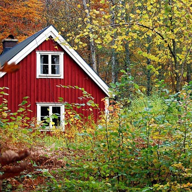 Autumn is here in Northern Sweden. #redcottage #woodenhome #svensknatur