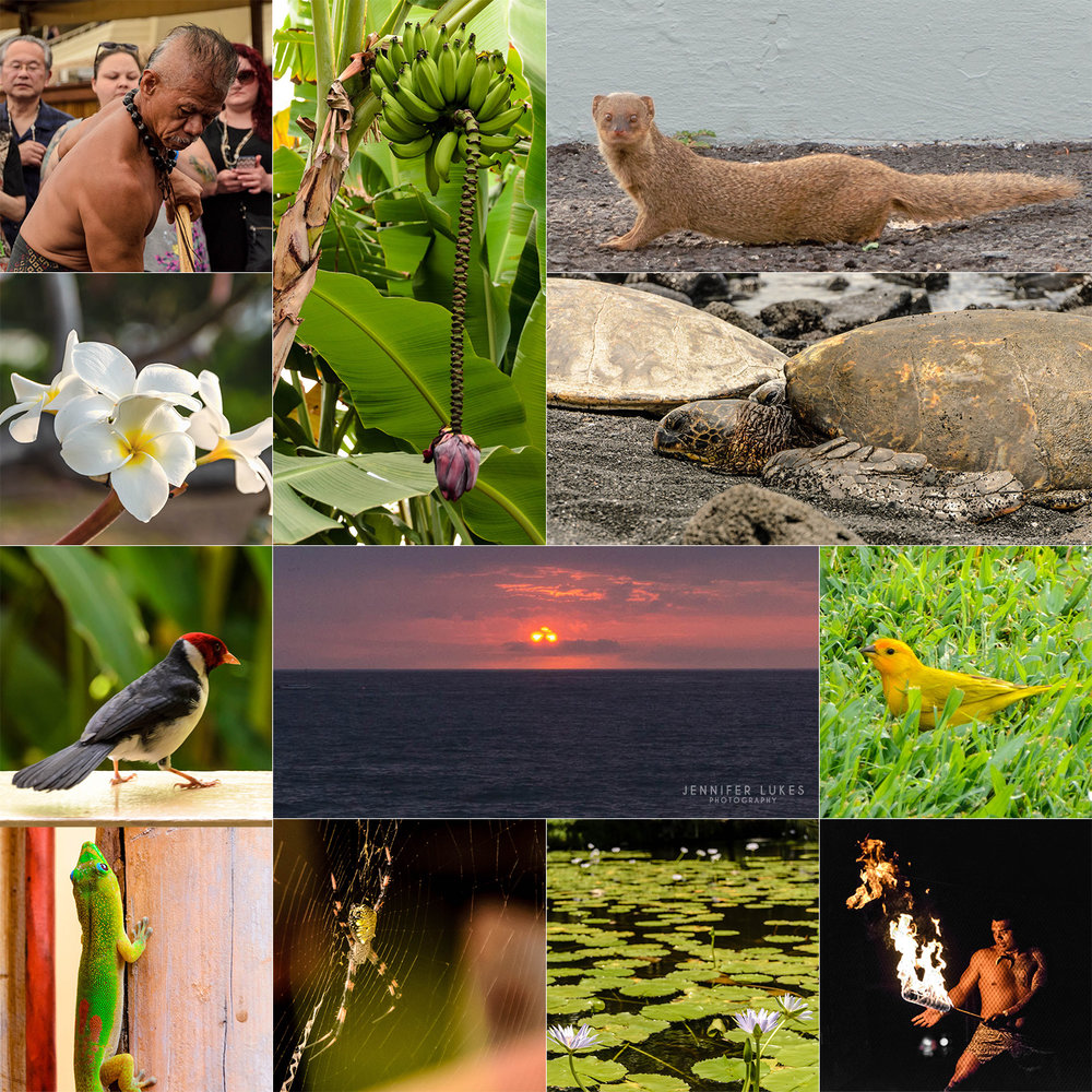 Details from Kailua-Kona, Hawaii showcasing the local flora, fauna, and locals.