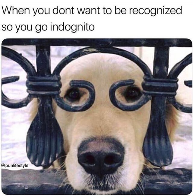 Here at Tape we encourage the power of stepping back and observing at times. Just to make sure you appreciate how terrier-ific you are. Go on step back and breathe - you'll get a new hound love for yourself.