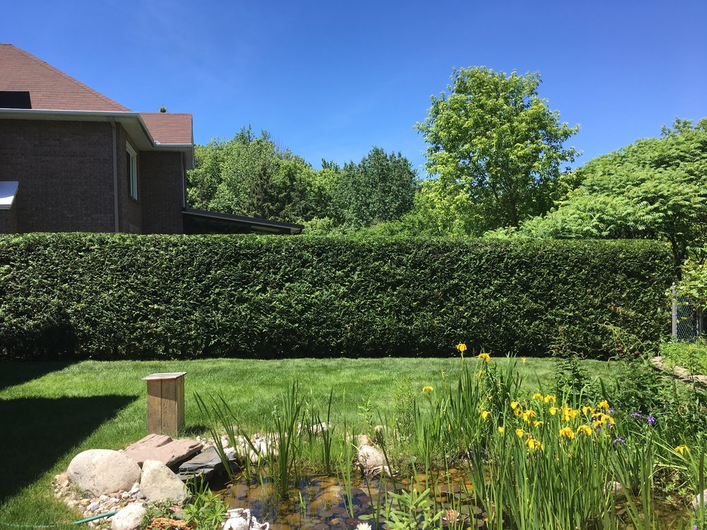 Topline Hedge Trimming | Nepean