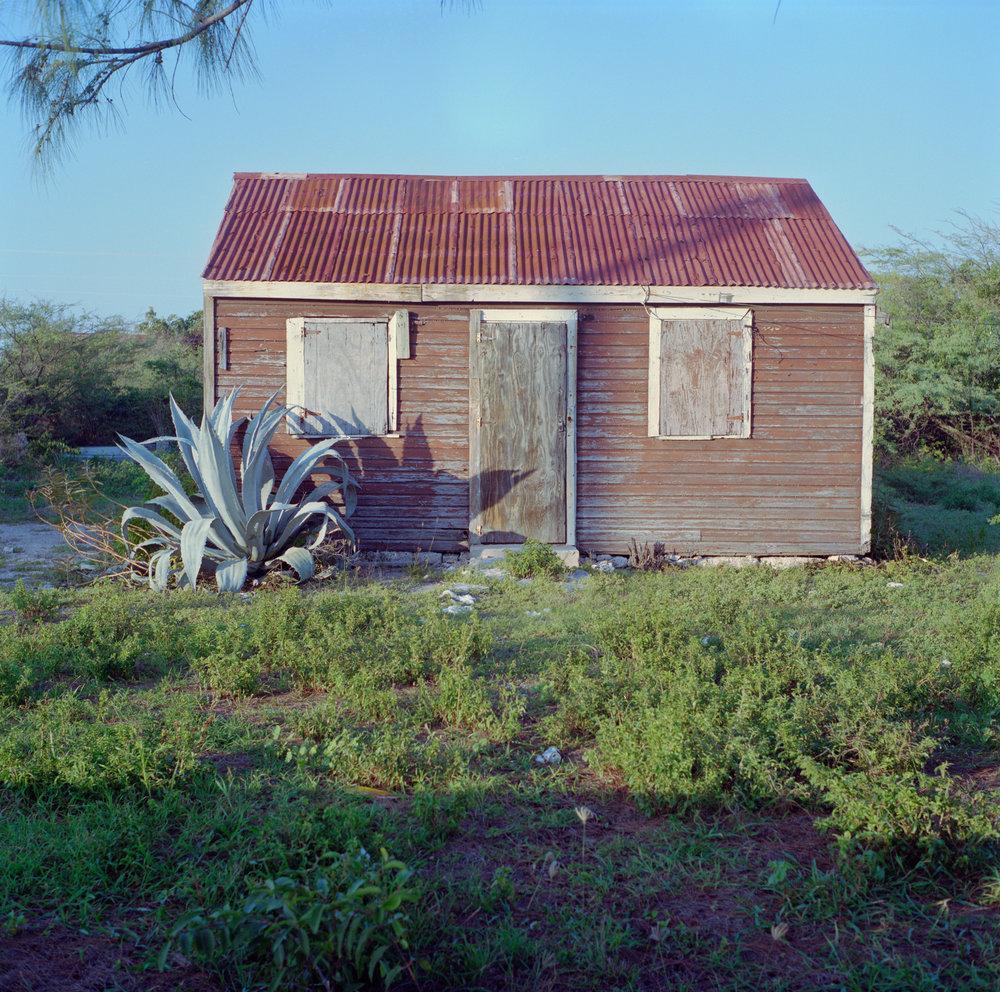 master_nathan-tci-house-cactus_1-16.jpg