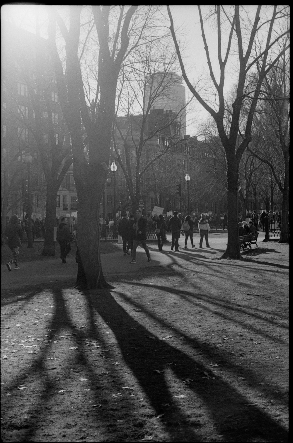 tree shadow.jpg