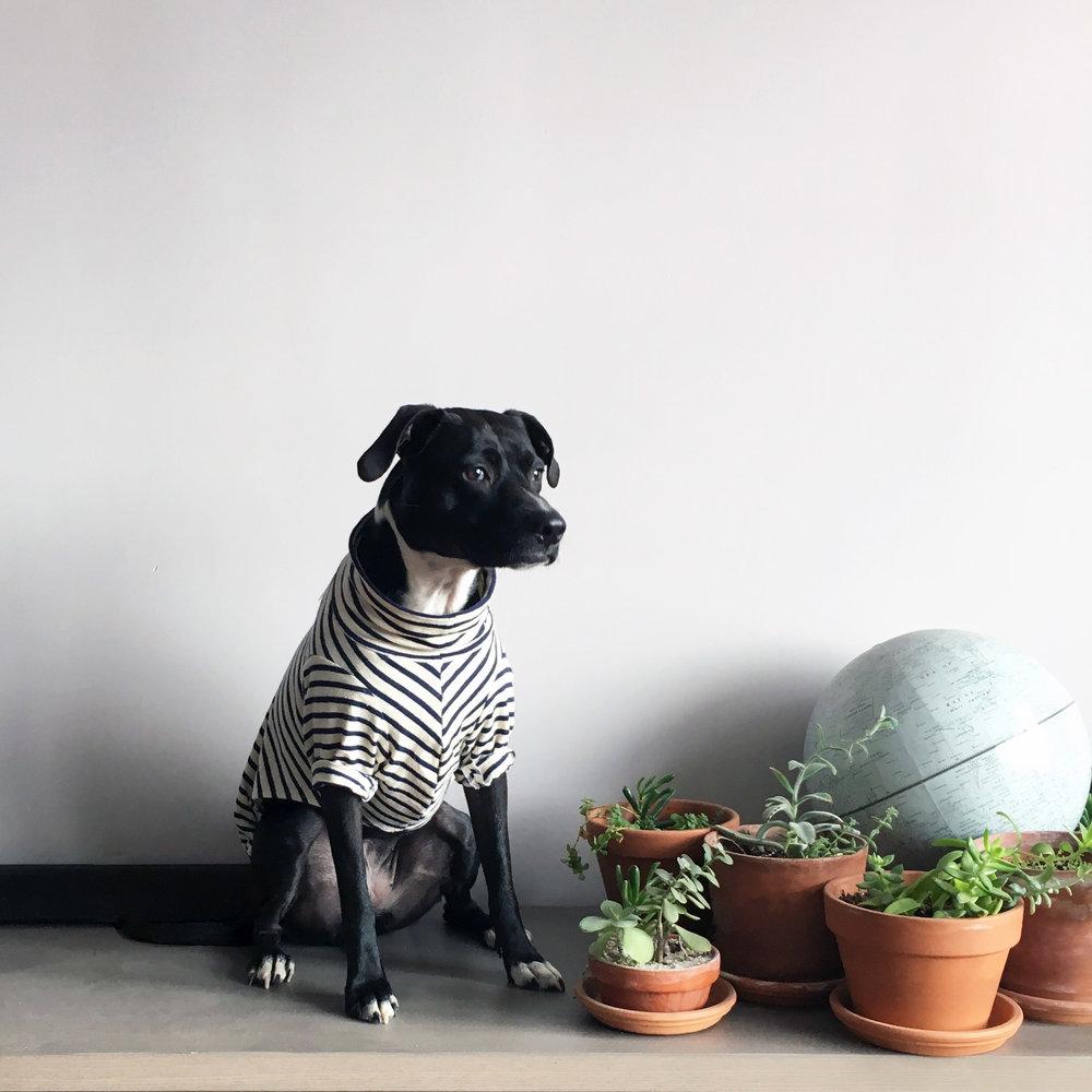 Lola at home.