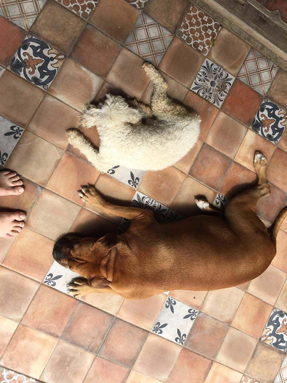 Dogs of the house we were visiting in Nicaragua.
