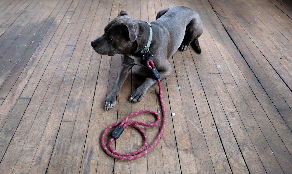 Rope Leash