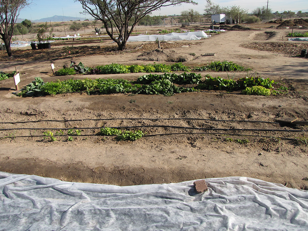 Desert Irrigation