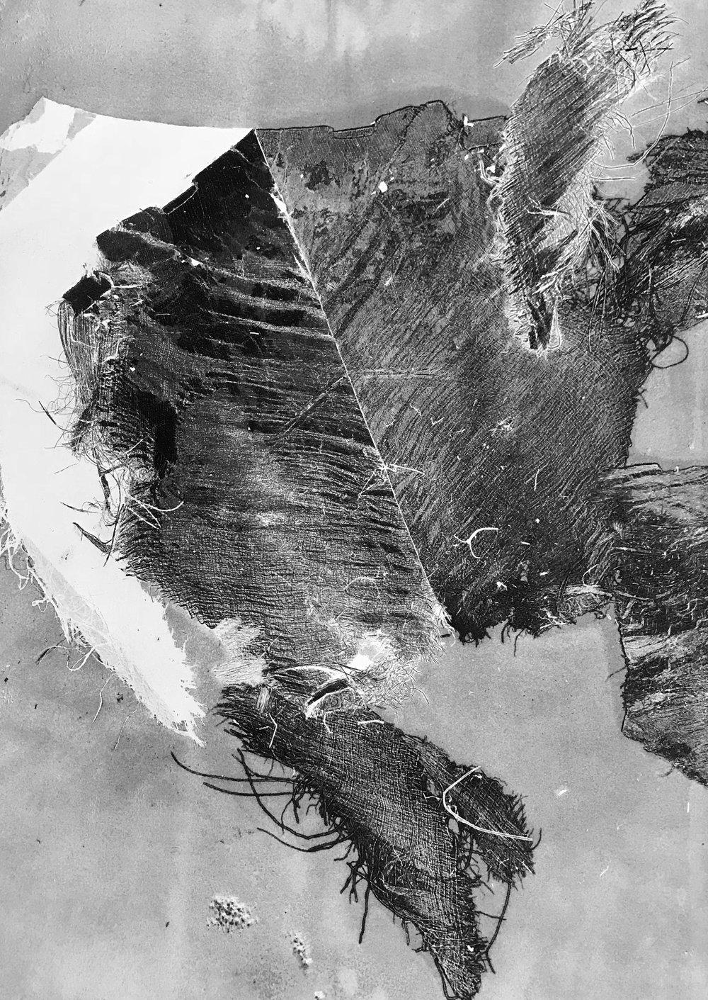 Untitled (Palm Series I)    Ashley Shumaker  Monotype, 2017  22x30  $550.00