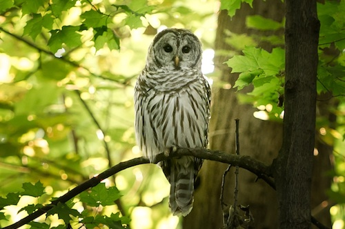 Upcoming Classes Owl Picture