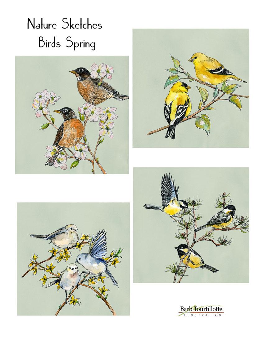 Nature Sketches birds spring copy.jpg