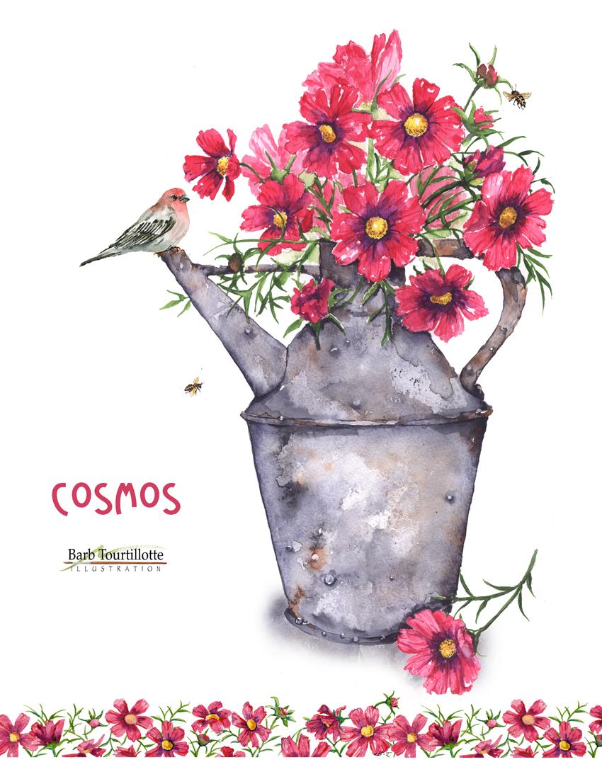 COsmos pg jpg.jpg