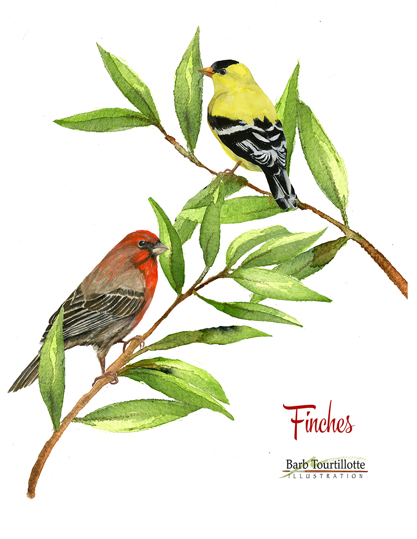 Finches page copy 2.jpg