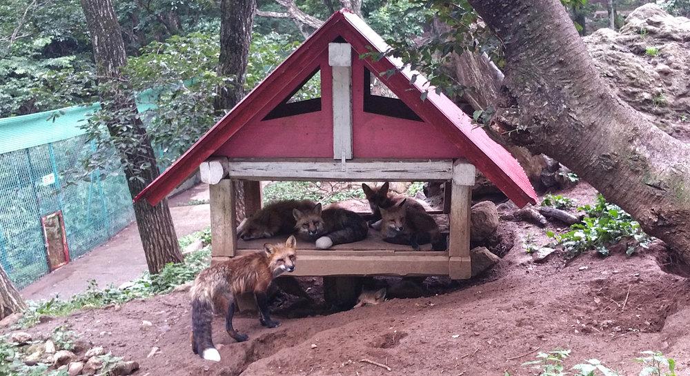 Zao-Fox-Village-Crowded-House.jpg