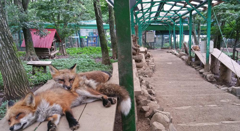 Zao-Fox-Village-Lounge-Suburb.jpg