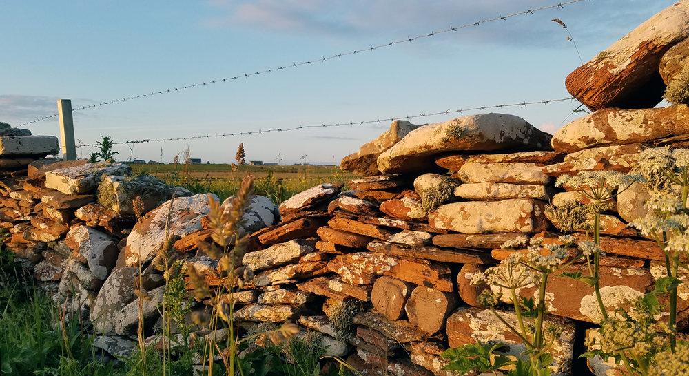 Orkney Farm Wall Lichen