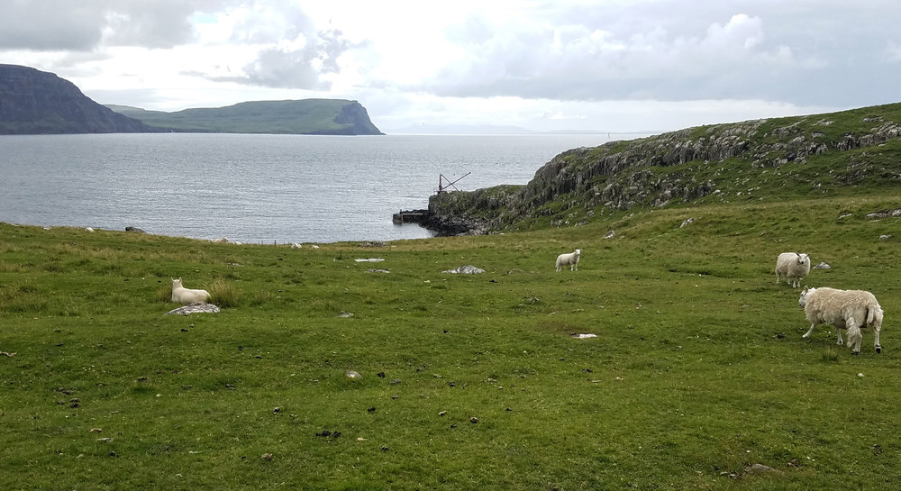 Neist Point Sheep and Moonen Bay