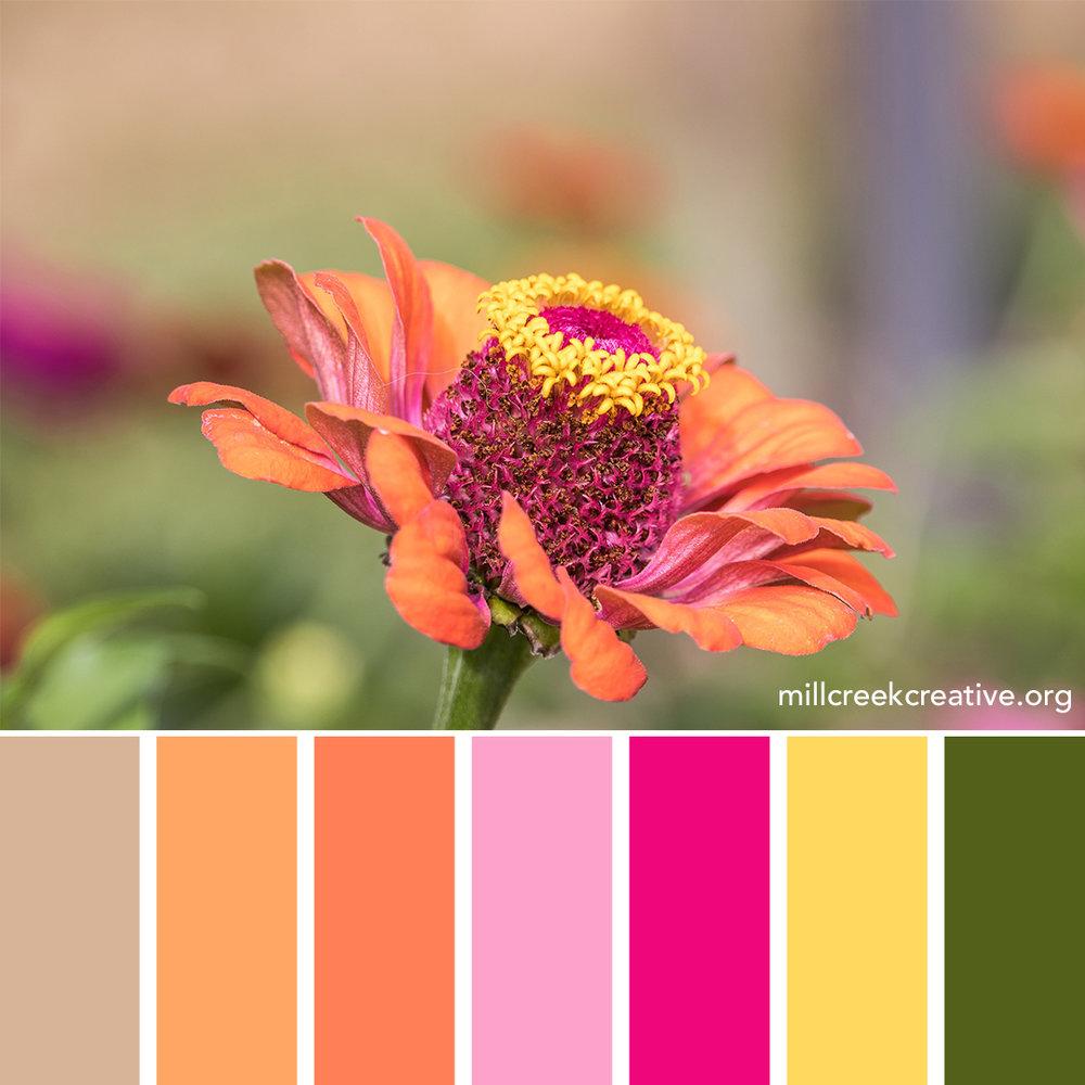 Zinnia - Spring Color Palette