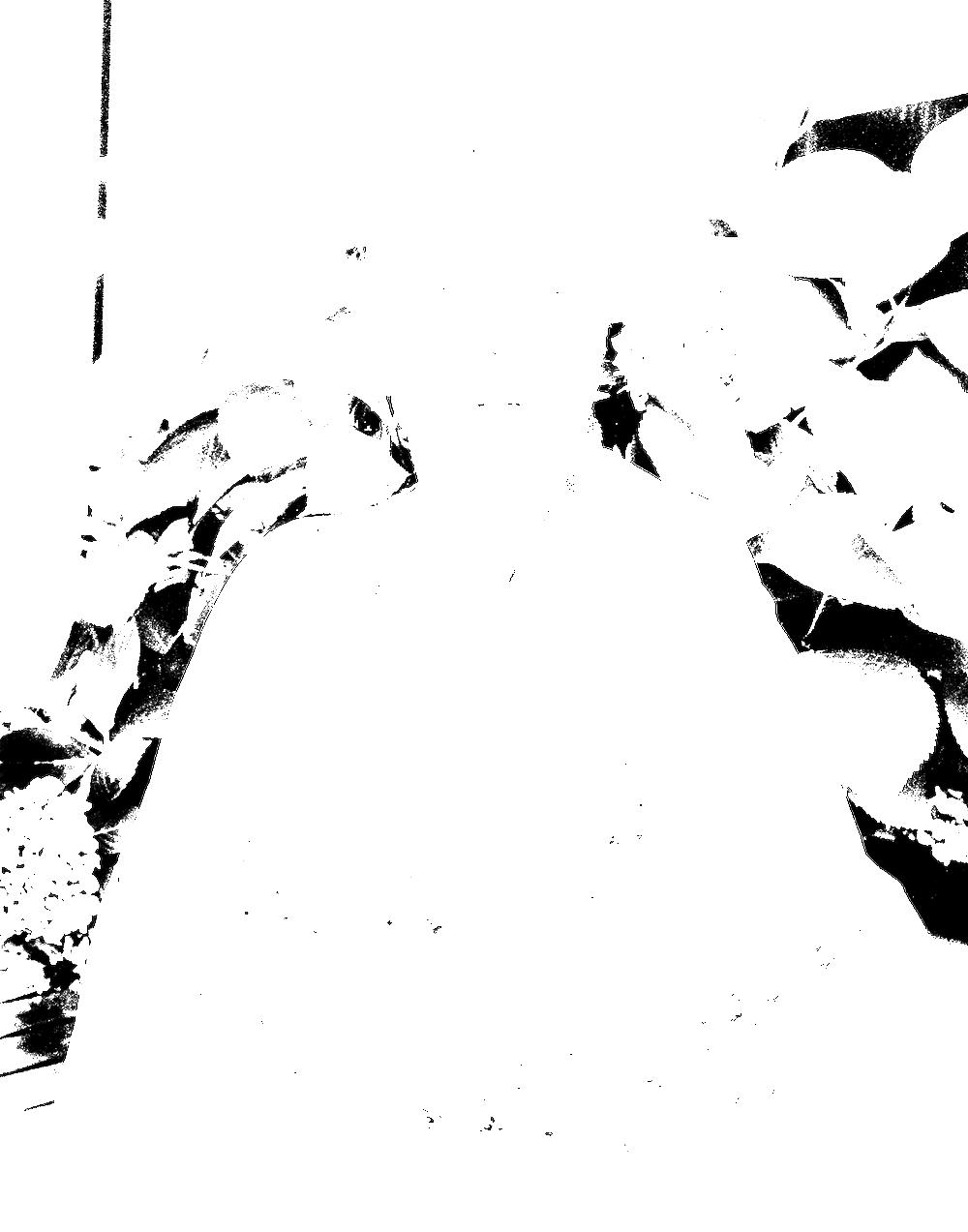 nina-4076.png