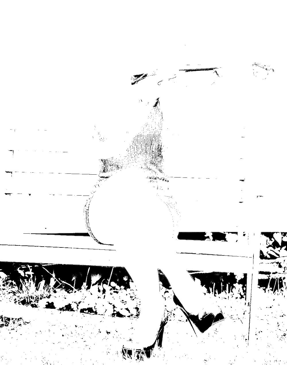 violinist-6945.png