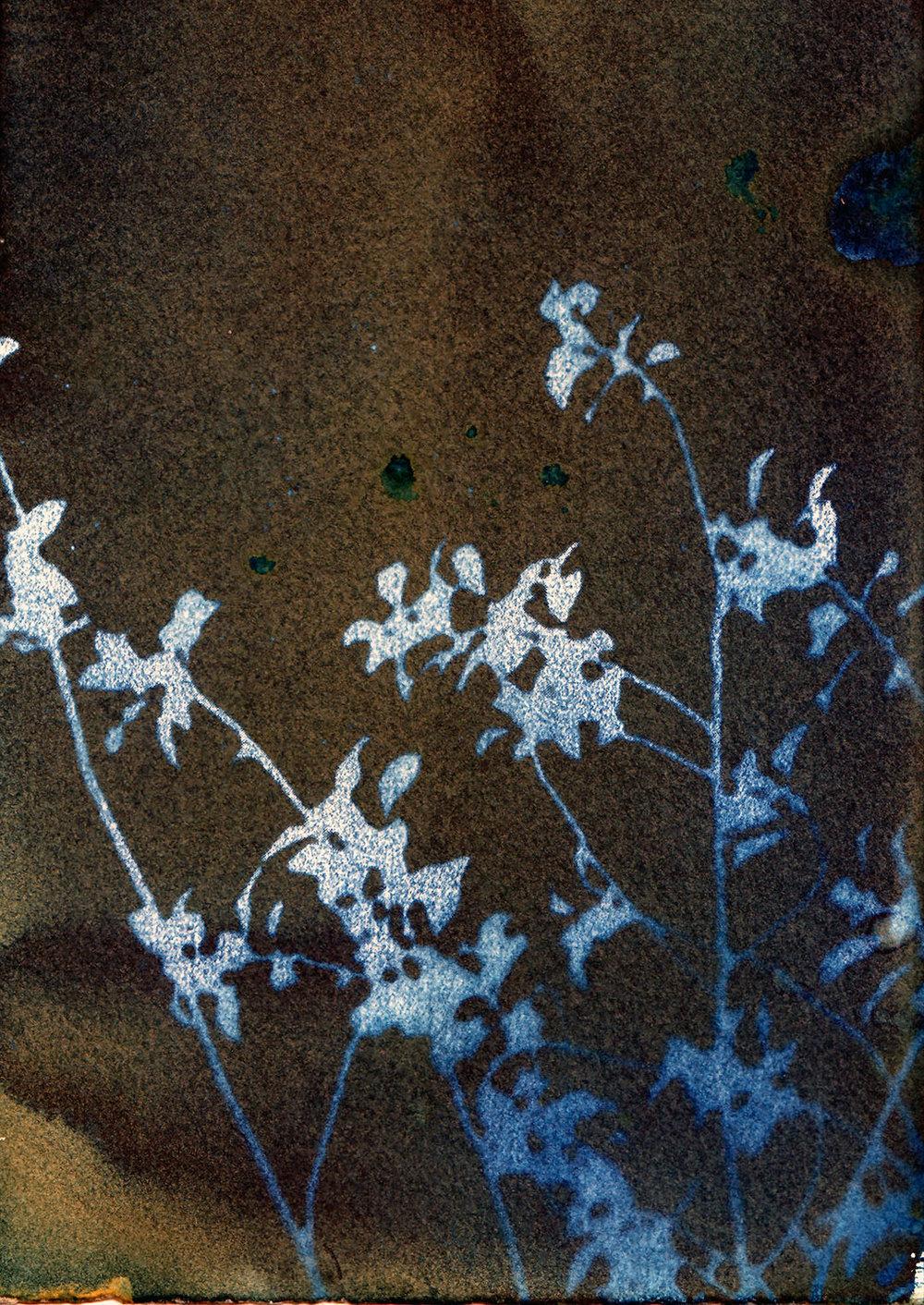 Revealed Floral