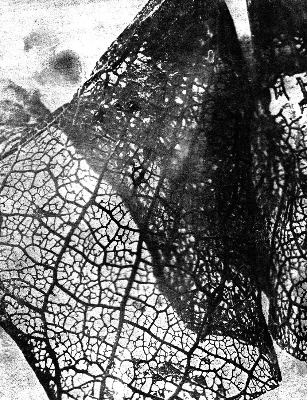 Negative Leaf