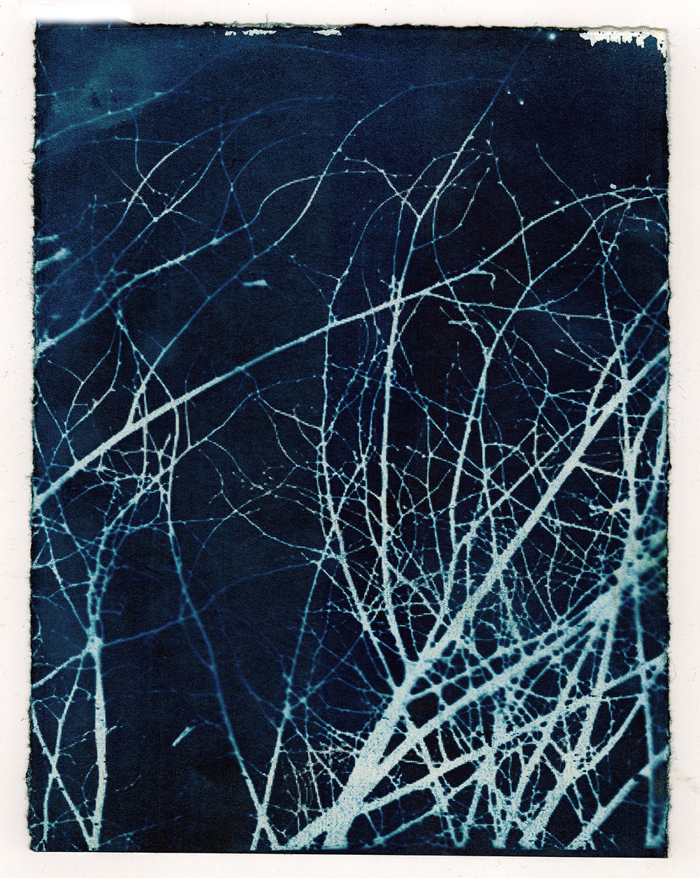Twigs In Winter