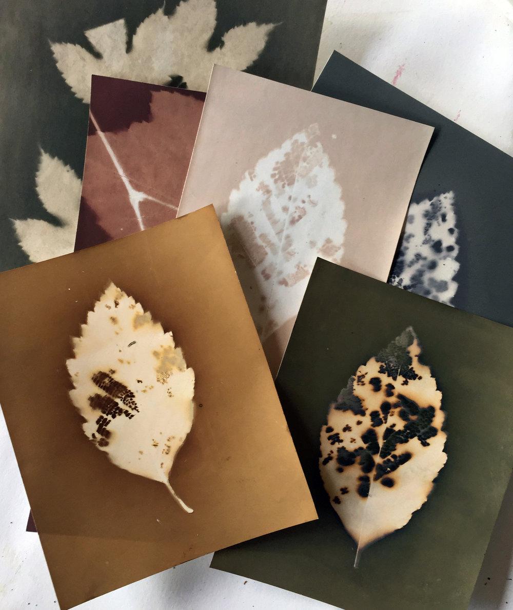 Lumen Prints
