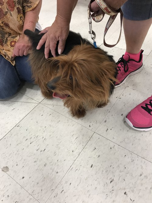 Adopting a rescue dog in the us superfinefeline chewie at the adoption meet and greet event on august 20 2017 m4hsunfo