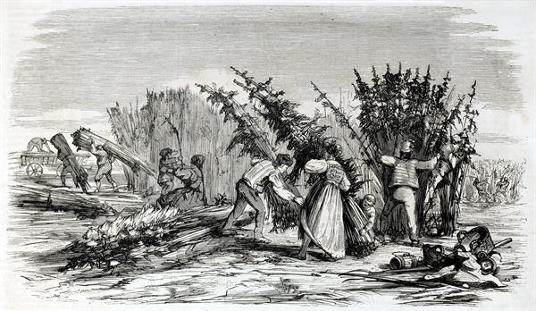 Early American farmers bringing in the hemp harvest.