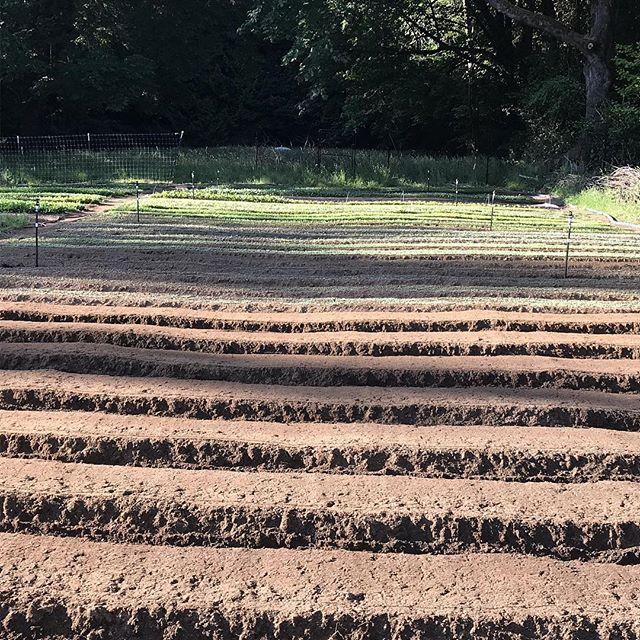Succession planting!!!