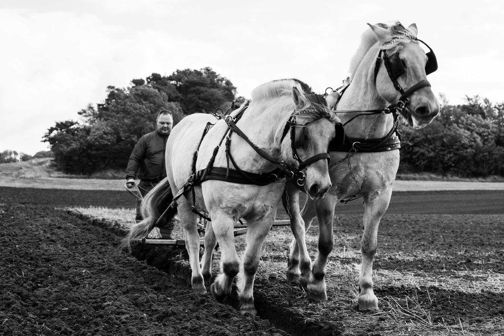 Der skal også pløjes rust selv om hestekrafterne er ægte.