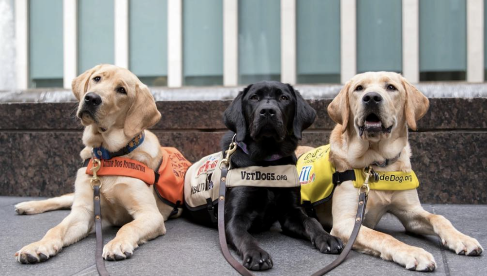 Sunny, Camden, and Izzy - @AmericasVetDogs