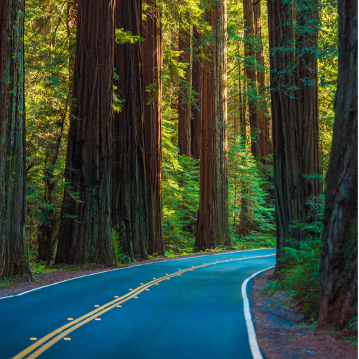 Redwoods.png