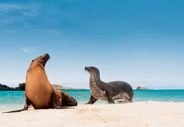 Silverseas Galapagos.png