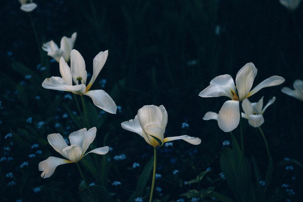 steve's garden-4.jpg