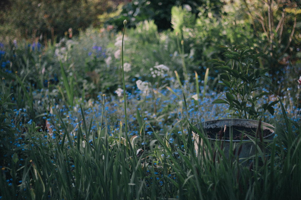 bucket and forget me nots-2.jpg