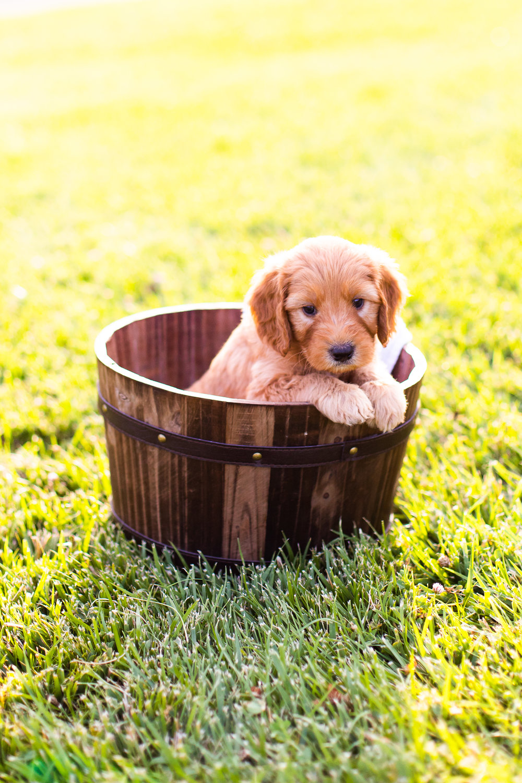 Puppies-7.jpg