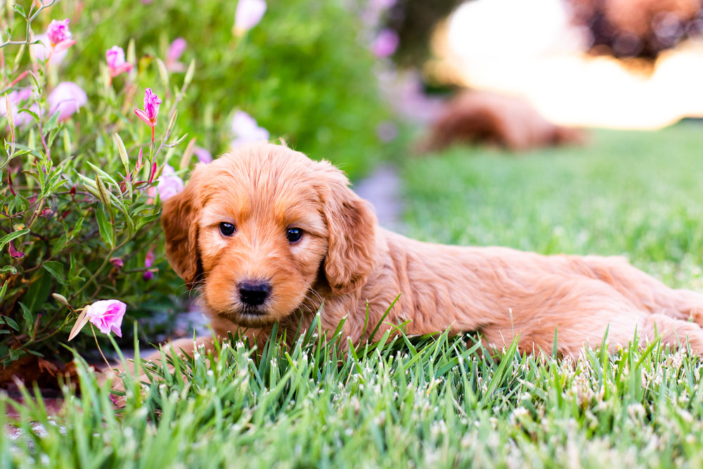 Puppies-13.jpg