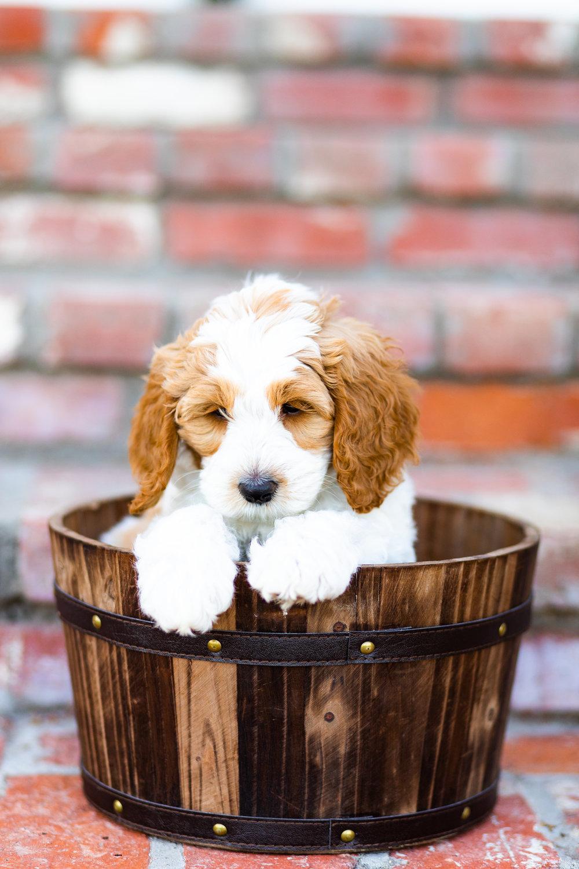 Puppies-3.jpg