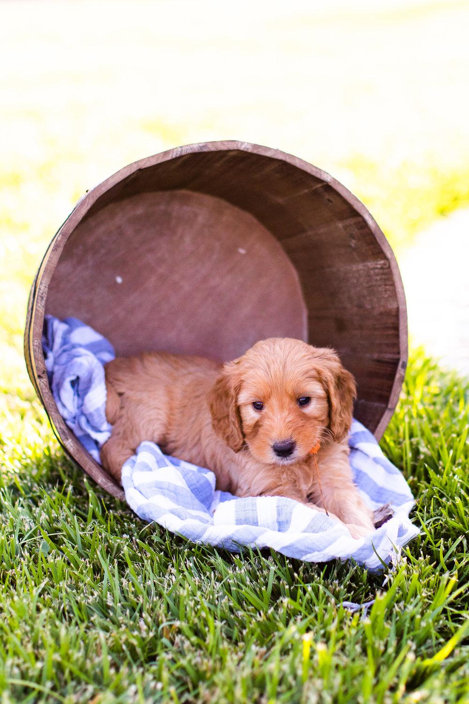 Puppies-10.jpg