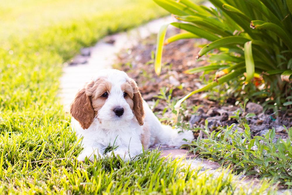 Puppies-5.jpg