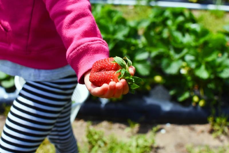 strawberries 3.jpg
