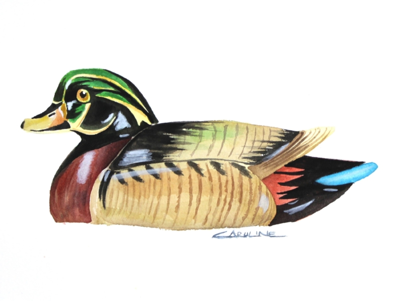 woodduckdecoy.jpg