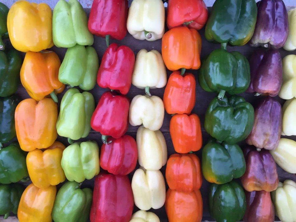 peppers 4.jpg